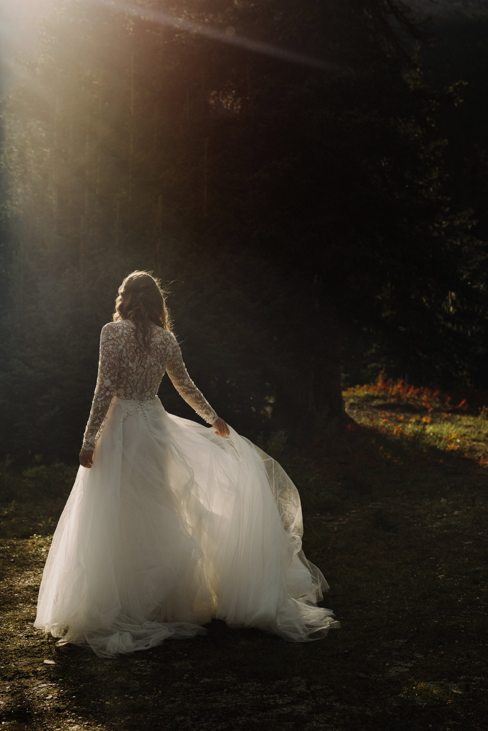 Sunset bridals in a sunlit forest in Banff National Park